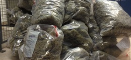 Project Green Giant: One tip leads to a ho-ho-ho lot of cash and drugs seized by Toronto Police
